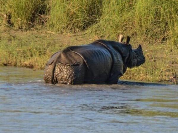 Bardia jungle safari